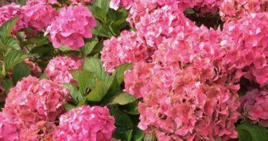 Ticknall Garden Club Update