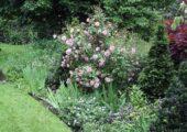 Open Garden, Askew Cottage, Repton
